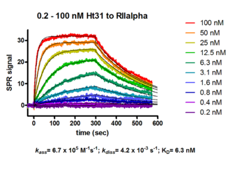 kinetic analysis of peptide inhibitor HT31 binding to PKA RII alpha