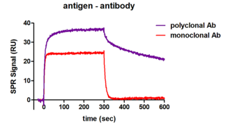qualitative antibody characterisation: different binding characteristics of one antigen binding to a monoclonal or polyclonal antibody